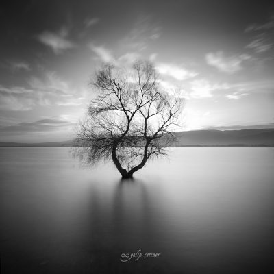 longexposure shot of the lonely tree in the lake