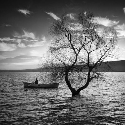 the lonely tree and the boat in the lake