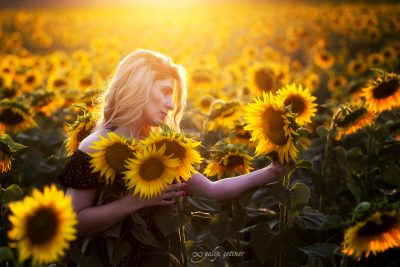 the portrait of the beautiful girl in the sunflower field in sunset