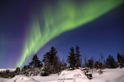 northern lights over the forest in lofoten, norway