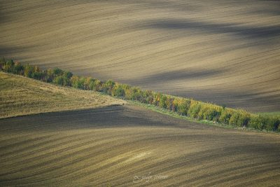 green line in brown field in moravia, checia