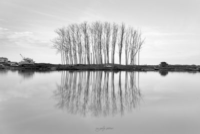 reflections of the trees in black&white