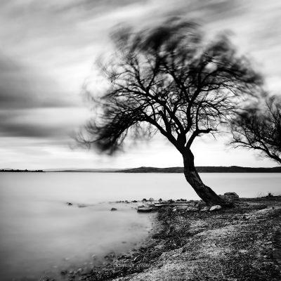 longexposure shot of the tree