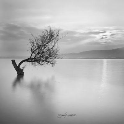 longexposure shot of the tree in the lake