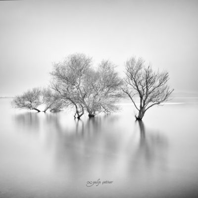 longexposure trees in the lake in black&white