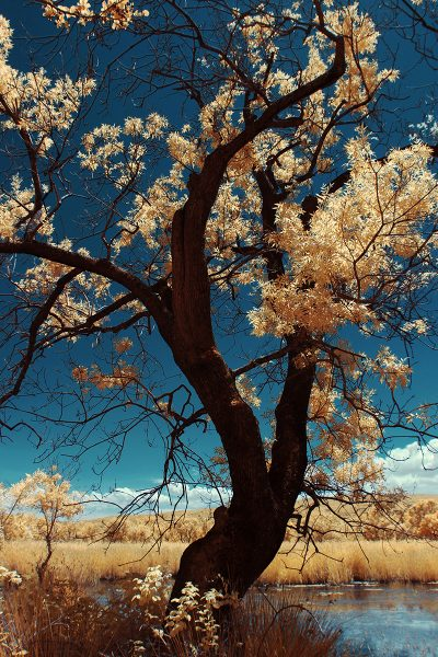 infrared shot of the tree in Karacabey Floodplain in Bursa, Turkiye