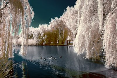 infrared shot of the botanical park in bursa